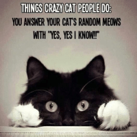 "Cats, Crazy, and Grumpy Cat: THINGS CRAZY CAT PEOPLE DO  YOU ANSWER YOUR CATS RANDOM MEONS  WTH ""YES, YES I KNOW!!"" Who's guilty? wink emoticon - Grumpy Cat. smile emoticon"