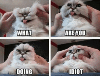 What are you doing idiot frown emoticon  Animal Memes.: WHAT  DOING  ARE YOU  IDIOT What are you doing idiot frown emoticon  Animal Memes.