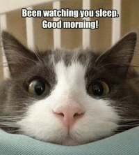 Indeed. smile emoticon  Animal Memes.: Been watching you sleep  Good morning! Indeed. smile emoticon  Animal Memes.