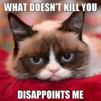 WHAT DOESN'T KILL YOU DISAPPOINTS ME What doesn't kill you........... Grumpy Cat. smile emoticon