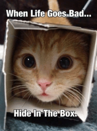 Indeed smile emoticon Animal Memes.: When Life Goes Bad...  Hide In The Box. Indeed smile emoticon Animal Memes.