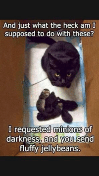 grin emoticon  Animal Memes. smile emoticon: And just what the heck am I  supposed to do with these?  I requested minions  of  darkness, and you  send  fluffy jellybeans. grin emoticon  Animal Memes. smile emoticon