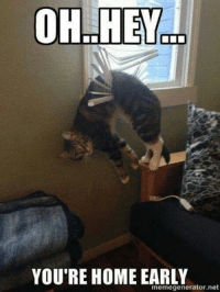 Oh hey… grin emoticon Join Animal Memes.: OH HEY  YOU'RE HOME EARLY  memegenerator.net Oh hey… grin emoticon Join Animal Memes.