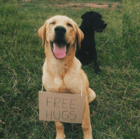Funny, Free, and All The: FREE  HUGS gimme all the hugs you can