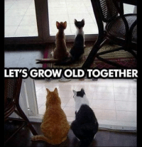 Awwwwww! D:  Animal Memes. smile emoticon: LET'S GROWOLD TOGETHER Awwwwww! D:  Animal Memes. smile emoticon