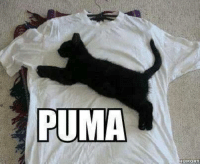 Puma…  Animal Memes. smile emoticon: PUMA  HUMORT Puma…  Animal Memes. smile emoticon