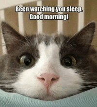 Been watching you sleepL  Good morning!