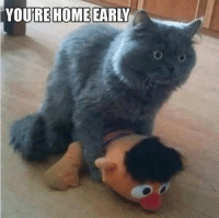 Animals, Anime, and Lol: YOURE HOME EARLY You're home early! LOL xD Animal Memes.
