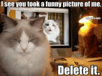 Funny, Grumpy Cat, and Pictures: I see you took a funny picture of me.  Oonsuch light.  Delete it. Delete it or else! squint emoticon