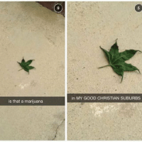 Well I never!: is that a marijuana  in MY GOOD CHRISTIAN SUBURBS Well I never!