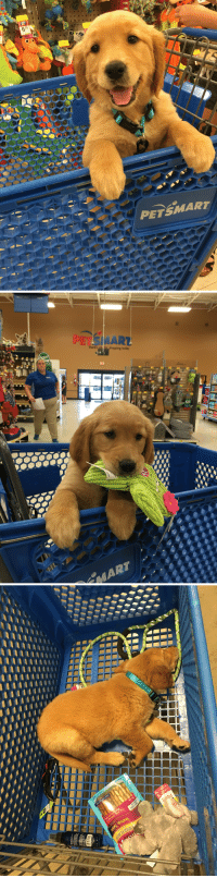 Girl, Good, and Petsmart: 679  PETSMART   PET  MART Being a good girl on her first trip to Petsmart