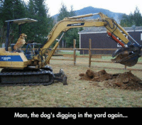 Mom, the dog's digging in the yard again... Not again