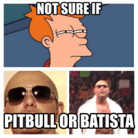 This is a tough one.: NOT SURE IF  PITBULL ORBATISTA This is a tough one.