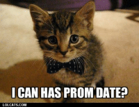 Dating, Grumpy Cat, and Date: CAN HAS PROM DATE?  LOLCATS COM
