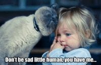 LIKE if you love your cat! smile emoticon: Don't be sad little human Touhaveme... LIKE if you love your cat! smile emoticon