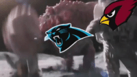 Arizona Cardinals, Carolina Panthers, and Football: A brief summary of this year's postseason...