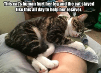 Cats, Grumpy Cat, and Help: This cats human hurt her leg and the cat stayed  like this all day to help herrecover.