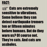 indeed!: FACT:  Cats are extremely  Sensitive to vibrations.  Some believe they can  detect earthquake tremors  ten or fifteen minutes  before humans. But do they  warn us? Of course not.  Theyre cats. And cats are  assholes. indeed!