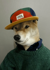 When she's attracted to your style, but hasn't realized that you're just another dog-ass nigga underneath...: @qwiktwist   When she's attracted to your style, but hasn't realized that you're just another dog-ass nigga underneath... When she's attracted to your style, but hasn't realized that you're just another dog-ass nigga underneath...