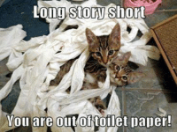 Long Cat: long Story  Short  You are out of toilet paper!