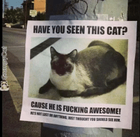 Cats, Fucking, and Grumpy Cat: HAVE YOU SEEN THIS CAT  CAUSE HEIS FUCKING AWESOME!  STORANYTHING uUST THOUGHT YOU SHOULD SEE HIM. Have you seen this cat!?!?!
