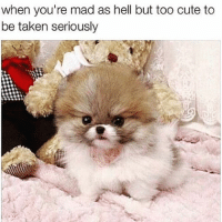This is me before coffee in the morning 😤☕️🐶: when you're mad as hell but too cute to  be taken seriously This is me before coffee in the morning 😤☕️🐶
