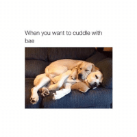 cute: When you want to cuddle with  bae cute