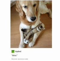 """how many APs is too many APs - Max textpost textposts: 6qubed  """"Mine.""""  Source: awwww-cute how many APs is too many APs - Max textpost textposts"""