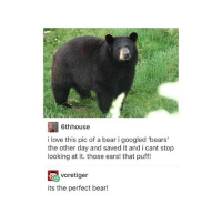 ( ͡° ͜ʖ ͡°) (Credit tagged) clean meme cleanmeme cleanmemes lol laughoutloud funny laughing laughinguntilicry laugh crying hilarious hahaha haha ha 😂 🤣 relatable wow omg used common stolen borrowed joking joker joke maymays maymay: 6thhouse  i love this pic of a bear i googled 'bears  the other day and saved it and i cant stop  looking at it. those ears! that puff!  voretiger  its the perfect bear! ( ͡° ͜ʖ ͡°) (Credit tagged) clean meme cleanmeme cleanmemes lol laughoutloud funny laughing laughinguntilicry laugh crying hilarious hahaha haha ha 😂 🤣 relatable wow omg used common stolen borrowed joking joker joke maymays maymay