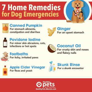 7 Home Remedies or Dog Emergencies 1 Canned Pumpkin for