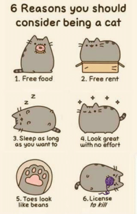 Share with your peers!  More @ Pusheen the Cat: 6 Reasons you should  consider being a cat  1. Free food  2. Free rent  3. Sleep as long  OO  with no effort  as you want to  6. License  5. Toes look  to kill  like beans Share with your peers!  More @ Pusheen the Cat