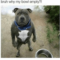Bruh, Funny, and Bowl: 71  bruh why my bowl empty?!