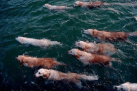 Dolphins are so beautiful: Dolphins are so beautiful