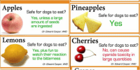 Apple, Dogs, and Friends: Can your dog safely  eat these fruits?  Apples  Safe for dogs to eat?  Yes, unless a large  amount of seeds  are ingested  -Dr. Edward Cooper, VMD  Avocados  Safe for dogs to eat?  No, can result  in vomiting  -Dr. Sherry Sanderson, DVM  Bananas  Safe for dogs to eat?  Yes RT TO SAVE SAVE UR FURRY FRIENDS LIVES!!!