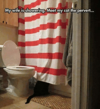 Cats, Shower, and Grumpy Cat: My wife is showering. Meet my cat the pervert... Anyone relate to this? tongue emoticon