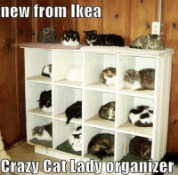 Cats, Crazy, and Ikea: new from Ikea  Crazy Cat Lady(Organizer