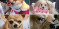 Funny, Mood, and Lily Lu: LILY LU My 4 moods