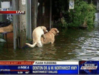 """I'ma drown in this pussy before I drown in this flood fuck you mean"": WEATHER FLASH FLOODING  WEATHER ALERT A  FOX4 DENTON DR. &w.NORTHWESTHWY  RFox4News  639 66. NORTHWEST DALLAS  SEVERE  STORMS ""I'ma drown in this pussy before I drown in this flood fuck you mean"""