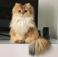 this cat is prettier than me😍🙃😍: this cat is prettier than me😍🙃😍