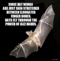 SINCE BAT WINGS  AREJUST SKIN STRETCHED  BETWEEN ELONGATED  FINGER BONES,  BATS FLYTHROUGH THE  via reddit The power of jazz hands!