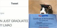 HIS NAME IS GOOSE THATS SO CUTE IM SCREAMING: Tweet  Serg  @surrgee  YO MY SON JUST GRADUATED FROM  SCHOOL!!!!! LMAO   PETSMART  Certificate of Achievement  This certifies that  QQSee  has successfully completed all requirements  necessary to complete  Puppy Education  Sponsored By the PetSmart Pet Training Program  20, 20/6  structor  Date HIS NAME IS GOOSE THATS SO CUTE IM SCREAMING