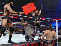 Wrestling, World Wrestling Entertainment, and Seeing: AYBACK  PAIha  TO SEE  3MB  \,还 Top quality signage