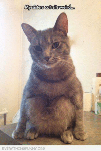 funny cats: My sisters cat sitsweird  EVERYTHINGFUNNY ORG