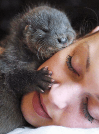 My new life goal is to be hugged by an otter: My new life goal is to be hugged by an otter