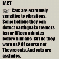 Must share! grin emoticon: FACT  Cats are extremely  Sensitive to vibrations.  Some believe they can  detect earthquake tremors  ten or fifteen minuteS  before humans. But do they  warn us? Of course not.  Theyre cats. And cats are  assholes. Must share! grin emoticon
