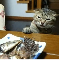 It just wants to touch da fishy. (credit: tatanorz)  【Related: This Cat Has The Cutest Purr In The World】 http://9gag.com/tv/p/al2aBk?ref=fbp: 737 i7/ It just wants to touch da fishy. (credit: tatanorz)  【Related: This Cat Has The Cutest Purr In The World】 http://9gag.com/tv/p/al2aBk?ref=fbp
