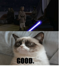 Grumpy Cat would make a fine pet to Darth Sidious then.: GOOD. Grumpy Cat would make a fine pet to Darth Sidious then.