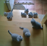 The invasion begins Source Cat Memes