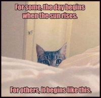 Grumpy Cat: Forsome the day begins  When the sunrises,  For others, Lt begins ikethis,