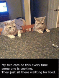 Grumpy Cat: My two cats do this every time  some one is cooking.  They just sit there waitting for food.